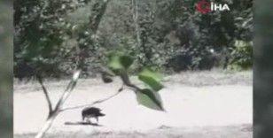 Karganın yılan avı kameraya yansıdı