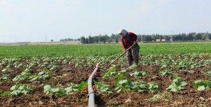 Tarım-ÜFE aylık yüzde 0,79 azaldı