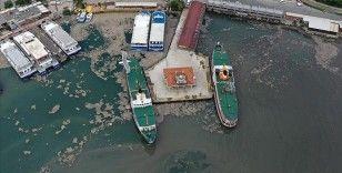 Deniz salyası Anadolu Yakası'nda bazı bölgelerde görülmeye devam ediyor