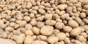 Mayısta fiyatı en fazla artan ürün patates, en çok düşen ise sivri biber oldu