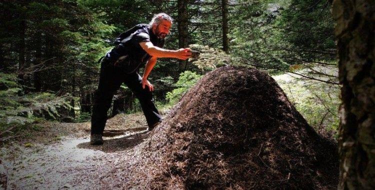 Uludağ'da dev karınca yuvaları görenleri hayretler içinde bırakıyor