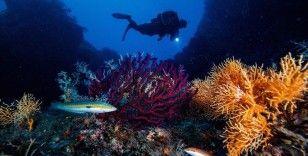 Okyanusların ısınması ve kirlenmesi canlı yaşamını tehdit ediyor