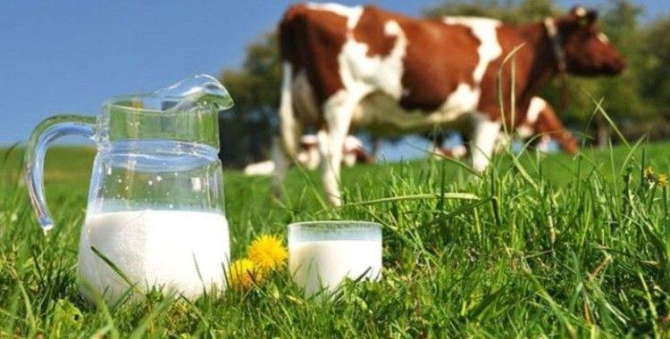 İnek sütü miktarı yüzde 1,8 arttı