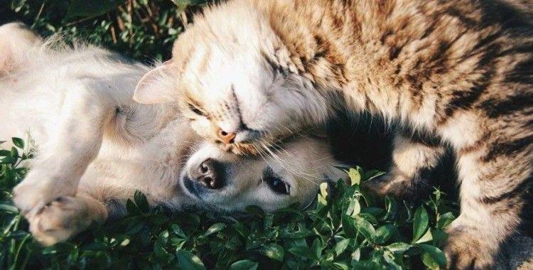 Hayvanları Koruma Kanunu geliyor: Taslakta hangi maddeler yer alıyor?