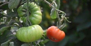 Organik tarımla 'Zehirsiz Sofralar' kurmak mümkün