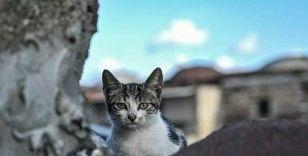 İstanbul'da kedi katliamı: Fırına atıp pişirdi, para cezası aldı