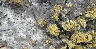 Orman yangını, çölleşme, kuraklık ve arazi bozulumu her yıl küresel ekonomiye 15 trilyon dolar zarar veriyor
