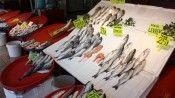 Müsilaj balıkçı esnafını olumsuz etkiledi: 'Denizdeki balığa bir zararı yok, biz de sıkı kontrolden geçiriyoruz'