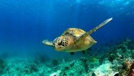 WWF: Akdeniz büyük tehdit altında