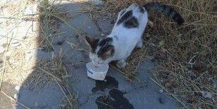 Kahramanmaraş'ta kafası tabelaya sıkışan kediyi jandarma kurtardı