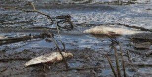 Alibeyköy Barajında korkutan görüntü: Onlarca balık öldü