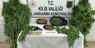 Kilis'te esrar operasyonu: 5 gözaltı
