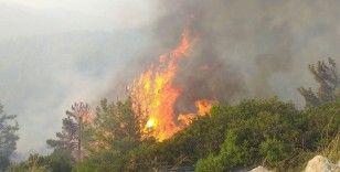 Milas'ta başlayan orman yangını Bodrum'a sıçradı, söndürme çalışmaları devam ediyor