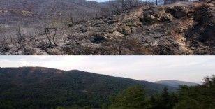 Marmaris'in yangın öncesi ve sonrası havadan görüntüleri, felaketin boyutunu gözler önüne serdi