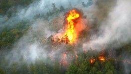 Dünya genelinde çıkan yangınlarda milyonlarca hektar ormanlık alan yandı