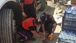 Antalya'da yangın söndürme çalışmasına destek veren ekipler, yaralı kaplumbağanın hayatını kurtardı