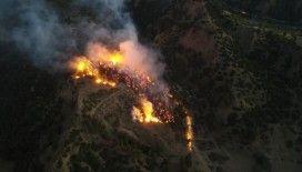 Manisa'da korkutan orman yangını