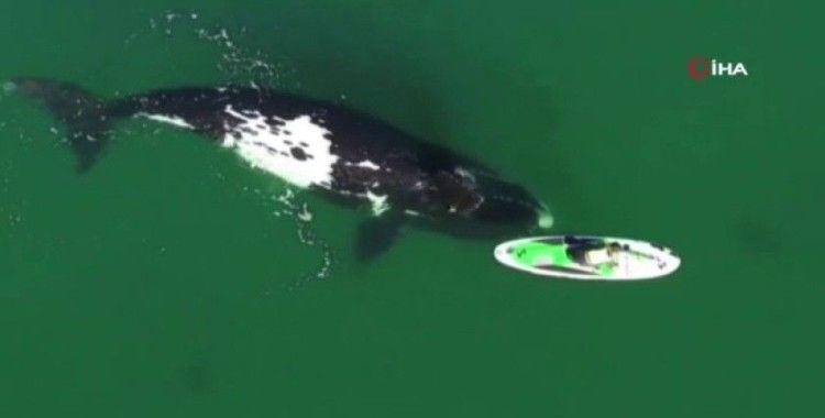 Arjantin'de kano süren kadınla balinanın dansı mest etti