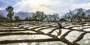Çeltikte daha az suyla daha fazla alanda üretim yapılabilecek