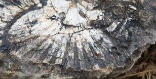 Kaya parçasında en az 65 milyon yıllık deniz canlısı bulundu