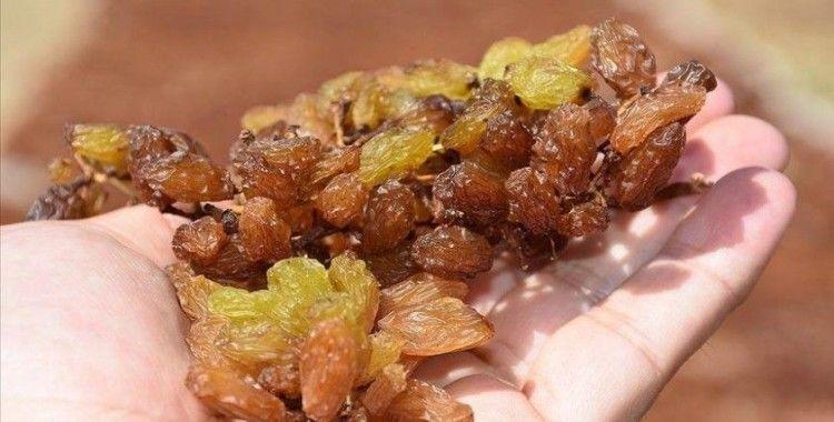 TMO çekirdeksiz kuru üzüm alımına hazır