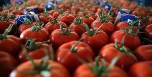Seralarda yetişen domates ve biber 45 ülkede sofralara taşınıyor