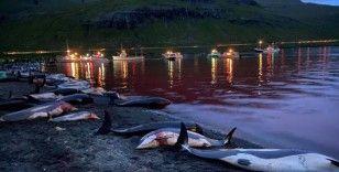 """Faroe Adaları'ndaki """"festivalde"""" bin 428 balina ve yunus öldürüldü"""