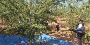 Elazığ'da 'organik badem hasat etkinliği' düzenlendi