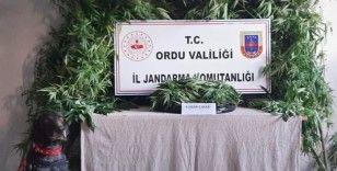 Ünye'de uyuşturucu operasyonu