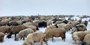 Doğu Karadeniz Yaylaları'nda erken görülen kar yağışı en çok onları etkiledi