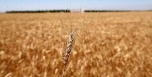 Tahıl ürünlerinde biyoçeşitlilik desteklerle artıyor