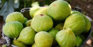 Egeli yaş meyve ve sebze ihracatçıları rekora koşuyor
