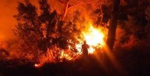 Bodrum 2 noktada yangın çıktı