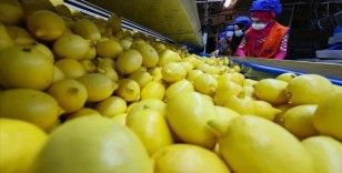 Limon ihracatında hedef 300 milyon dolar