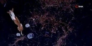 La Palma'da lavlar arasında kalan hayvanlara dronelarla yiyecek dağıtılıyor