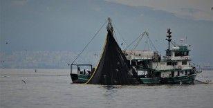 Körfeze giren 600 bin ton hamsiyi saatler içinde yakaladılar