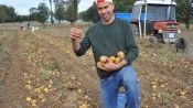 Tohum desteği meyvelerini verdi