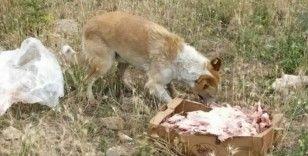 Havaların soğumasıyla sokak hayvanlarının beslenme sıkıntısı artmaya başladı