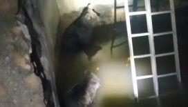 Şemdinli'de sulama havuzuna düşen 2 yavru ayı kurtarıldı