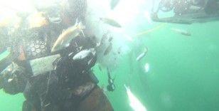 6 bin balık İzmit Körfezi'nde hayat buldu